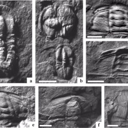 Just out | Palynomorphs from the Cambrian Series 3, Parahio valley (Spiti), Northwest Himalaya @ Palaeoworld