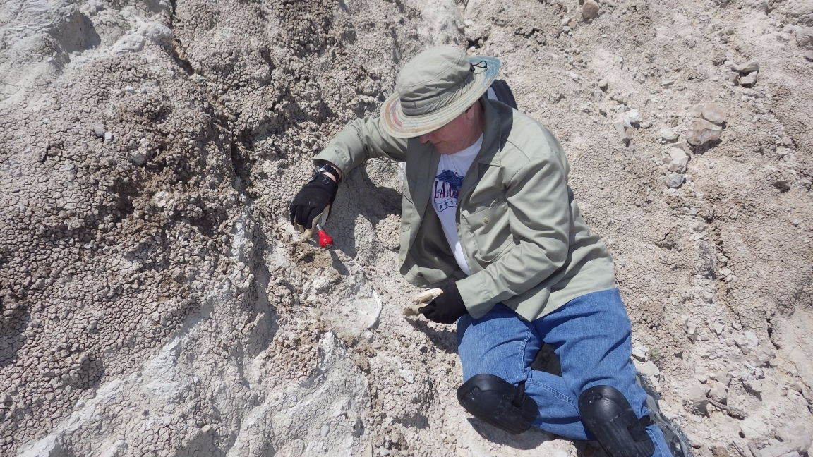 On the News | USA | Treks for Rex: Public invited to uncover dinosaur bones, other creatures @ The Bismark Tribune