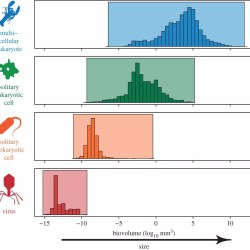 Just out | Hierarchical complexity and the size limits of life @ Proceedings of the Royal Society B