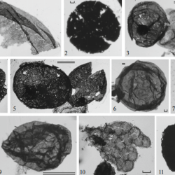 Just out | Taxonomic composition and biostratigraphic value of the Early Riphean organic-walled microfossil association from the Ust'-Il'ya Formation of the Anabar Uplift, Northern Siberia @ Stratigraphy and Geological Correlation