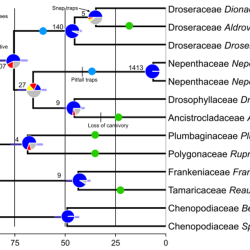 Just out | Widespread paleopolyploidy, gene tree conflict, and recalcitrant relationships among the carnivorous Caryophyllales @American Journal of Botany