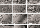 Just out | A late Rhuddanian (early Llandovery, Silurian) trilobite association from South China and its implications @ Palaeoworld