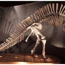Just out   The Venice specimen ofOuranosaurus nigeriensis(Dinosauria, Ornithopoda) @PeerJ