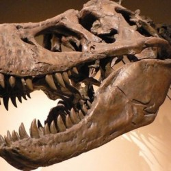 On the News | 'I really want to touch it': U of A experts discover dinosaur skin fossils @ CBC News