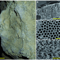 Just out |  Endo- and epilithic faunal succession in a Pliocene–Pleistocene cave on Rhodes, Greece: record of a transgression @ Palaeontology