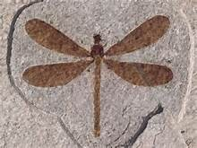 Just out | An enigmatic hawker dragonfly from the Middle Jurassic of China (Odonata, Aeshnoptera) @PalZ