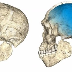On the News | Moroccan fossils shake up understanding of human origins @ Reuters
