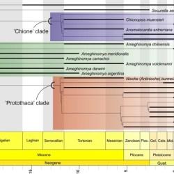 Just out | Quantitative palaeobiogeographical analysis of South American Neogene Chioninae (Bivalvia: Veneridae) @Palaeogeography, Palaeoclimatology, Palaeoecology