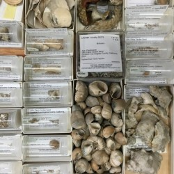 Job | Paleontology Collections Manager and Digital Projects Coordinator