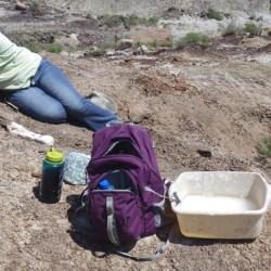 On the News | USA | North Dakota Geological Survey announces public fossil dig dates @ Brainerd Dispatch