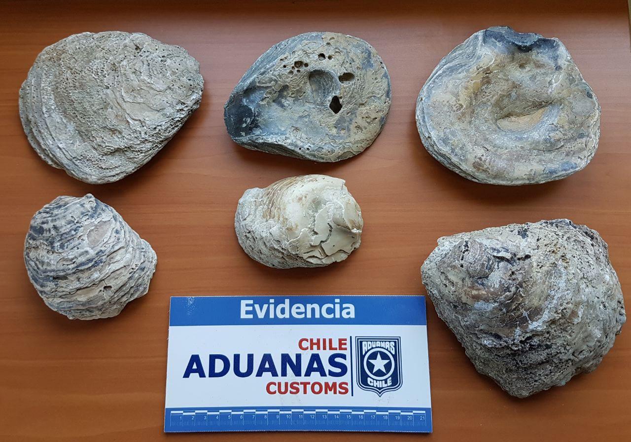 On the News | Chile | Aduanas incauta seis piezas fósiles en paso fronterizo Coyhaique Alto @ El Divisadero