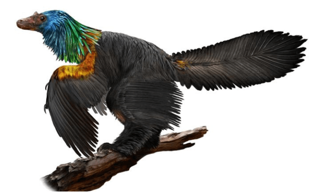On the News | China | Scientists see evidence of iridescent rainbow feathers on a dinosaur @ Los Angeles Times