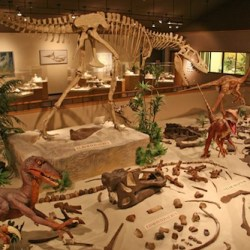 Opportunity | Volunteering & interning at the Great Plains Dinosaur Museum