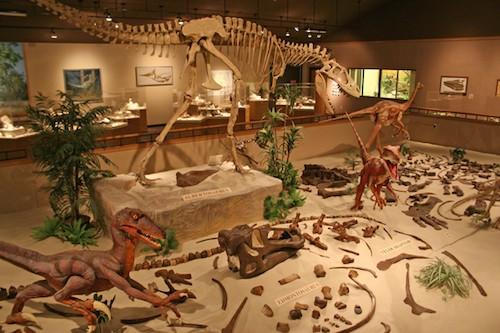 Opportunity | Volunteering & interning at the Great Plains Dinosaur Museum