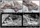 Just out   A new small-bodied ornithopod (Dinosauria, Ornithischia) from a deep, high-energy Early Cretaceous river of the Australian–Antarctic rift system @ Peer J