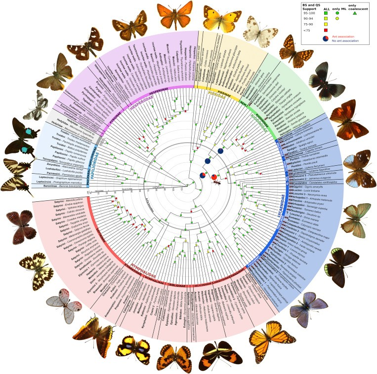 Just out | A Comprehensive and Dated Phylogenomic Analysis of Butterflies @ Current Biology