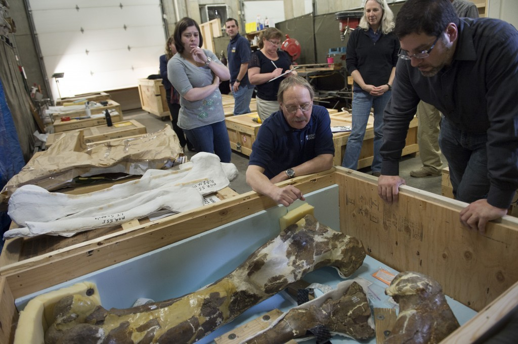 Paleobiology Postdoctoral Fellowship @ the National Museum of