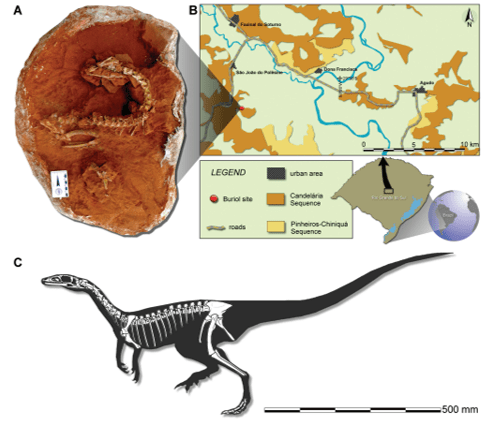 Just out | Early evolution of sauropodomorphs: anatomy and ...