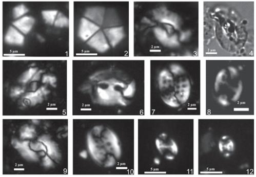 Calcareous nannofossil biostratigraphy dating