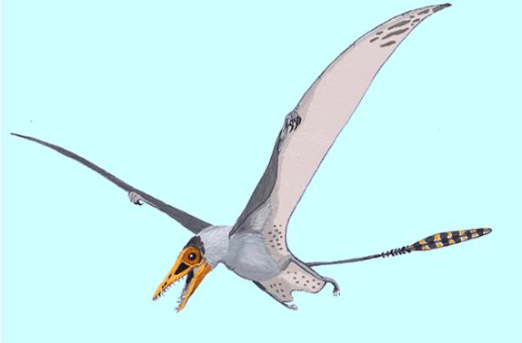 On the News | Brazil | Cientistas esperam encontrar ovos de pterossauros no Paraná @ Exame