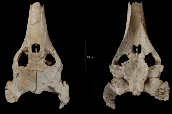 Job | University of Bristol | Research Associate in Palaeobiology (Functional evolution of the early tetrapod skull)