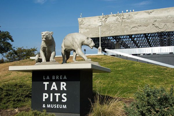 Job | La Brea Tar Pits and Museum | Assistant Collections Manager