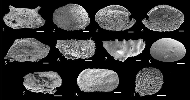 Just out | Carnian (Late Triassic) ostracods from the Sorgun Ophiolitic Mélange (Southern Turkey): Taxonomy, palaeoenvironment, and evidence of predation @ Palaeontologia Electronica
