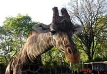 Se aprobó en la Legislatura la norma para transformar al Zoo en un Ecoparque