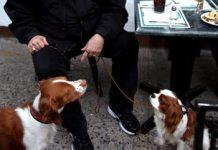 Los vecinos deciden si las mascotas entran a locales de gastronomía