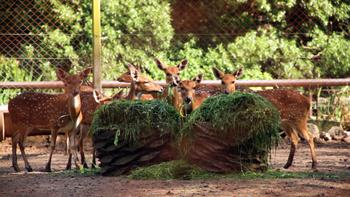 Ciervos del Ecoparque tienen un nuevo hogar en el ECAS
