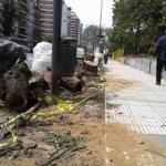 Se talarán 21 árboles en buen estado en el Parque Las Heras de Palermo