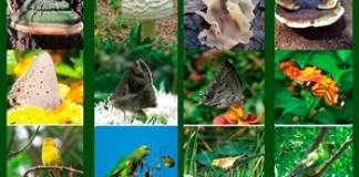 Guías visuales de Aves, Hongos y Mariposas elaboradas por el Jardín Botánico Carlos Thays