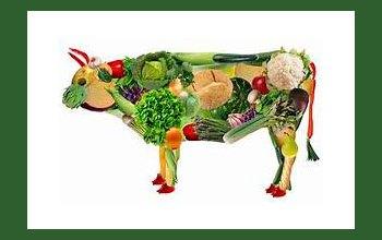 Charlas sobre alimentación vegetariana en las Estaciones Saludables