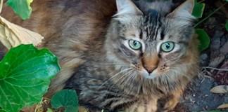 Atención Veterinaria Gratuita para tu mascota