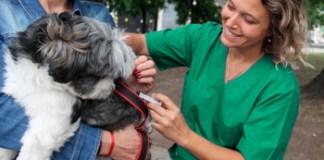 Vacuná a tu mascota contra la rabia en forma gratuita en la Ciudad