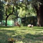 Maras en el Ecoparque