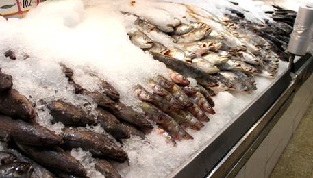 Cuidados a tener en cuenta al cocinar el pescado