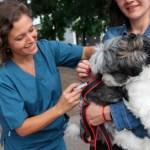 Campaña de vacunación antirrábica gratuita para perros y gatos