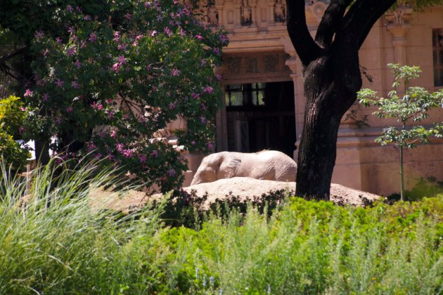 Ecoparque - Elefante