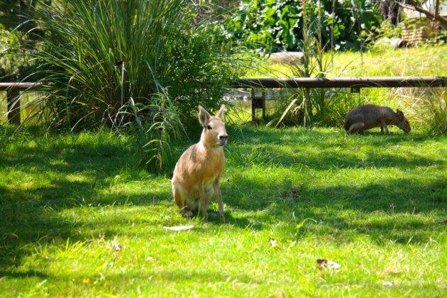 Ecoparque - Maras