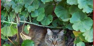 No hay evidencia de que las mascotas transmitan COVID-19