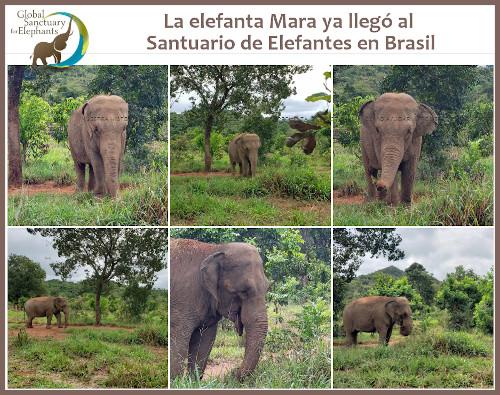 Mara llegó a su destino en Brasil