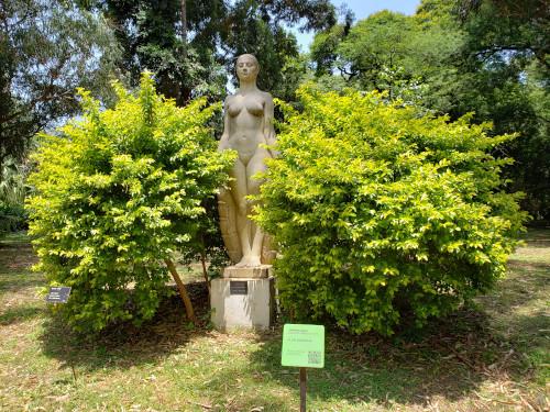 """Flor Indigena en el Jardín Botánico """"Carlos Thays"""""""