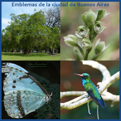 Emblemas de la Ciudad: ave, árbol, flor y mariposa