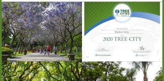 "La Ciudad de Buenos Aires reconocida como ""Tree Cities of the World 2020"""