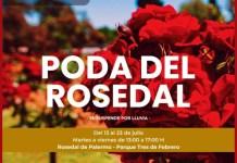 Esquejes de rosas gratis para los vecinos de la poda anual en el Rosedal de Palermo