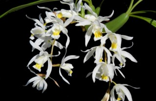 Photo: Malibu Orchid Society