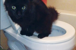 Two cats with differing IQs were rescued from a tree by a specialized animal rescue team. Gunnar here taught himself to use the toilet.