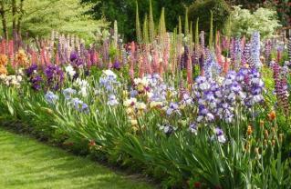 Palisades Garden Club to Hear Iris Expert Jill Bonino