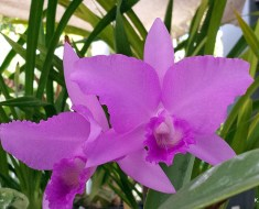 Malibu Orchid Society to Present Annual Auction